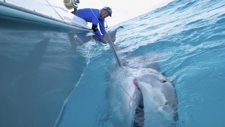 Bro Catches MASSIVE 1,000-Pound Tiger Shark While Bottom Fishing In The Bahamas