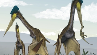 Fossil Of Enormous Flying Monster That Ate Baby Dinosaurs With The Wingspan Of A Plane Discovered