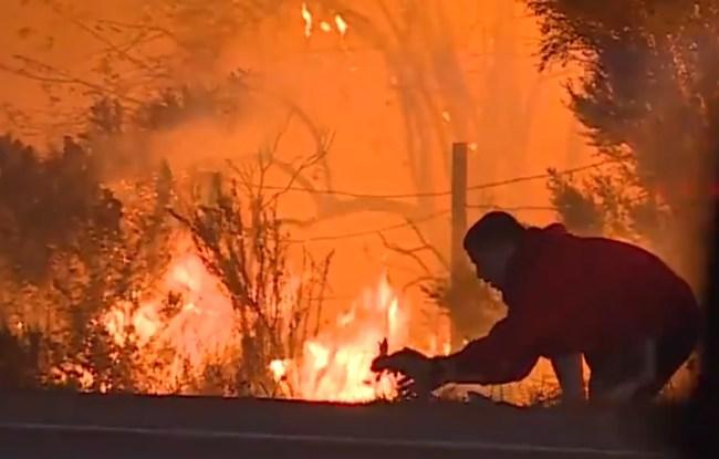 man saves rabbit california fires