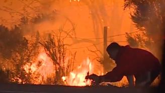 Man Becomes Internet Hero After Video Of Him Saving A Rabbit From California Fires Goes Viral