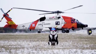 Piper The 'Aviation Bird Dog' Protects Planes From Crashing Into Birds And Is Darn Good At The Job