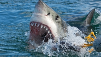 The Gnarliest Great White Shark Encounter From Inside A Diving Cage That You'll Ever See