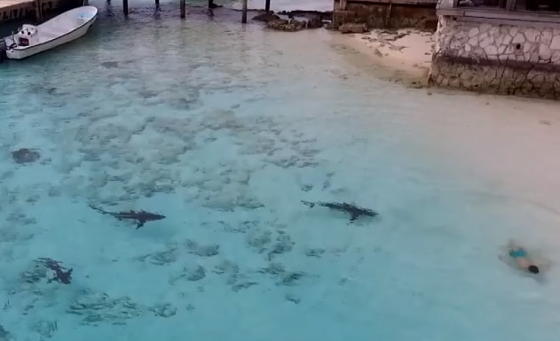 boy sharks bahamas