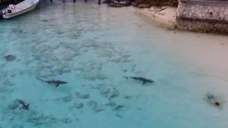 Moment Drone Operator Saves Boy From Swarm Of Sharks Swimming Towards Him In The Bahamas
