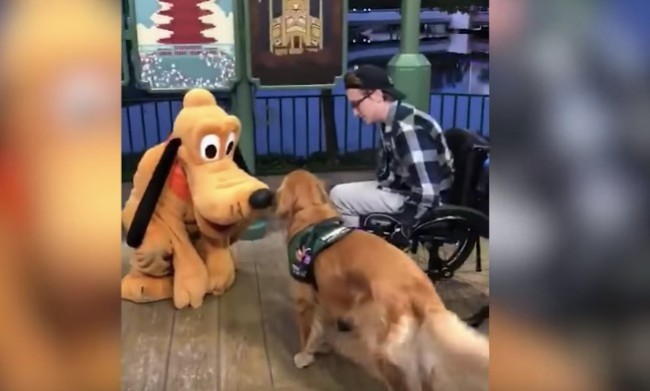 service dog meets Pluto