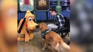 Very Happy Service Dog Gets To Meet His Hero Pluto At Disney World