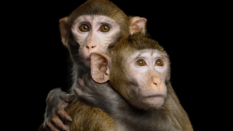 Monkeys Cloned For The First Time Ever, Could Humans Be Next?