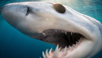 Florida Fishermen SHOCKED When A Massive Mako Shark Shows Up Next To The Boat And Goes Nuts
