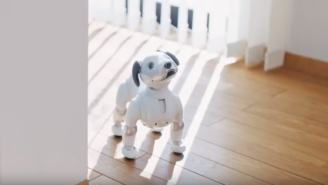 Meet Aibo, The Very Good Dog That's A Robot And Doing Tricks At CES