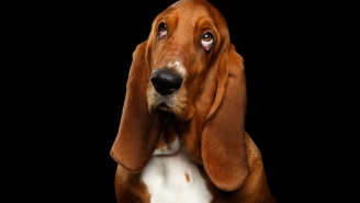 Can Dogs Smell Fear? They Can But They Might Not React Like We'd Expect