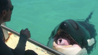 We Now Live In A World Where Killer Whales Can Talk To Humans