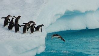 Poop Trail Seen From Space Help Scientists Discover 1.5 Million Penguin Super-Colony In Antarctica