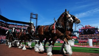 """Sports Finance Report: Anheuser Busch Brings """"Performance Based Model"""" To Sports Sponsorships"""