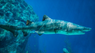 20-Year-Old Has Been Attacked By A Shark, A Bear And A Rattlesnake In Less Than 4 Years