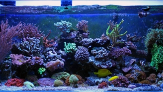 Hackers Stole A Casino's High-Roller Database Through A Thermometer In A Fish Tank