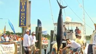16-Year-Old Reels In 400-Pound Marlin During North Carolina Tournament