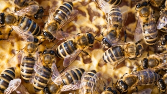 A Swarm Of Bees Invaded A Soccer Game And Everyone Hit The Ground Like An Air Raid Bombing Drill