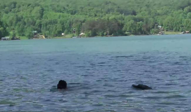 remote controlled alligator head prank