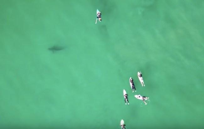 sharks circling surfers