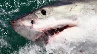How To Survive A Shark Attack According To Former Navy SEAL Team Six Operator And He Says Don't Punch It