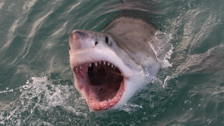 Great White Shark In Cape Cod Nearly Jumps Into A Fishing Boat While Stealing A Fish