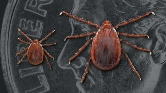 Great News! A New Type Of Tick Has Come To America For The First Time In 50 Years And It's Carrying Deadly Diseases