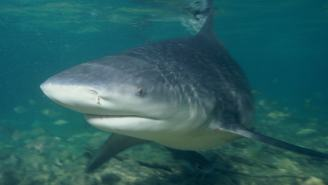 Texas Man Survives Brutal Shark Attack Only To Have His Body Ravaged By Flesh-Eating Bacteria
