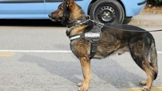 Colombian Drug Cartel Puts Out A $70,000 Hit On Drug-Sniffing Dog
