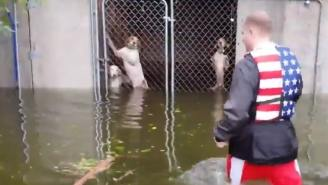 53 Dogs Saved From Hurricane Florence By Hero Driving School Bus And Other Heartwarming Animal Rescues
