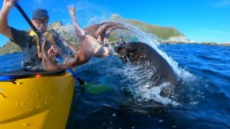Seal Slapping Kayaker In The Face With An Octopus Is Your Video Of The Day