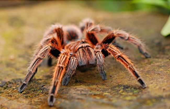spiders stolen philadelphia zoo