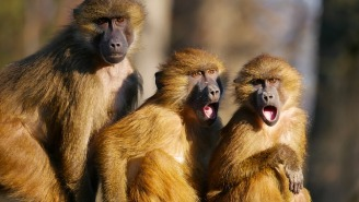 Group Of Monkeys Attack Medical Official, Steal Coronavirus Blood Samples In India