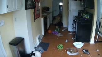 Camera Captures A Dog Nearly Burning His Owners House Down In A Reminder To Clean Ya Dang Kitchen Up