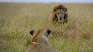Sir David Attenborough's New BBC Earth Series 'Dynasties' Looks Like 'Sopranos' For Wild Animals