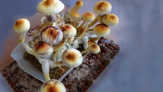 Magic Mushrooms Could Be Coming To A Drug Store Near You As A New Depression Medication