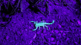 At $39 MILLION Per Gallon, Here's Why Scorpion Venom Is The Most Expensive Liquid On The Planet