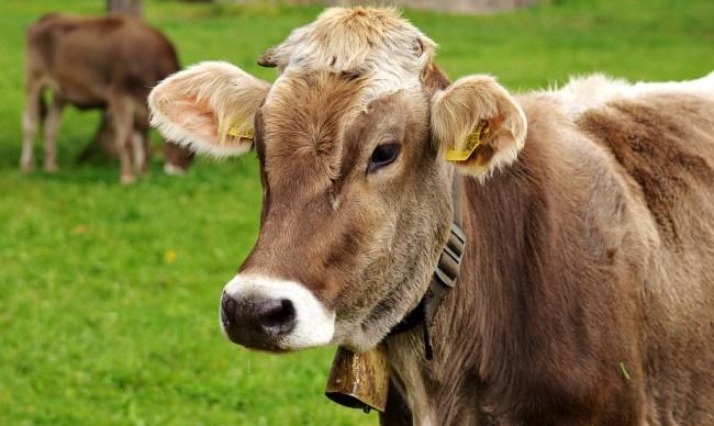 peta anti animal idioms
