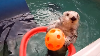 Eddie The Otter, Known For Dunking And Self-Pleasuring, Dies At Age 20