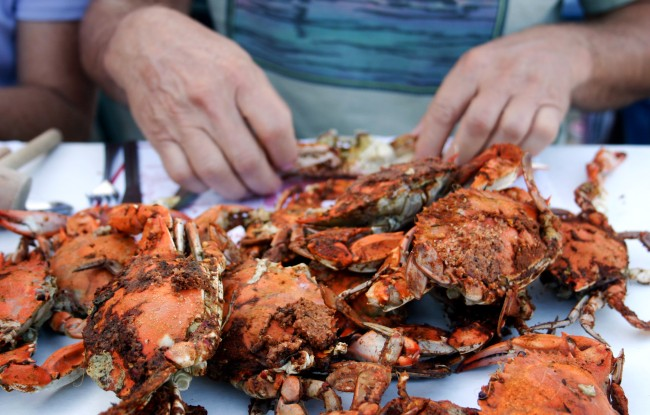 Fresh steamed crabs, served at a restaurant by the dozen. Maryland, on the Chesapeake Bay.