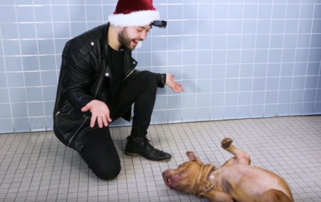 Magician John Stessel performs magic tricks for shelter dogs