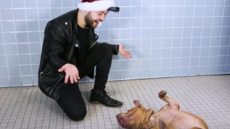 Magician Performs Tricks For Amazed Shelter Dogs And This Is The Internet At Its Absolute Best