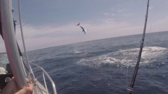 Crazy Mako Shark Does Acrobatic Flips Next To The Boat While These Fishermen Lose Their Sh*t