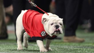 PETA's Latest Target Is College Teams That Use Live Animals For Mascots And They Kind Of Have A Point