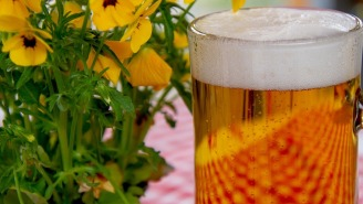Your Favorite Beer Might Contain Weed Killer But How Worried Should You Be?