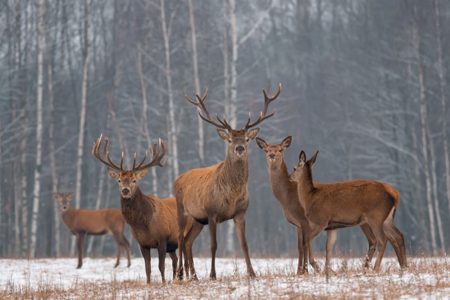 Chronic Wasting Disease(CWD)