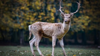 The Dangers Of CWD, The Zombie Deer Disease That Could Spread To Humans – How Hunters Can Protect Themselves