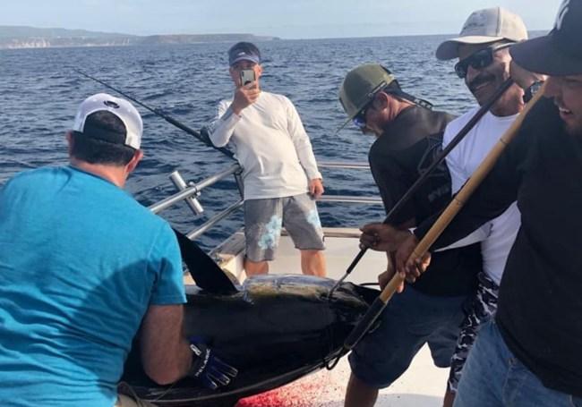 record yellowfin tuna