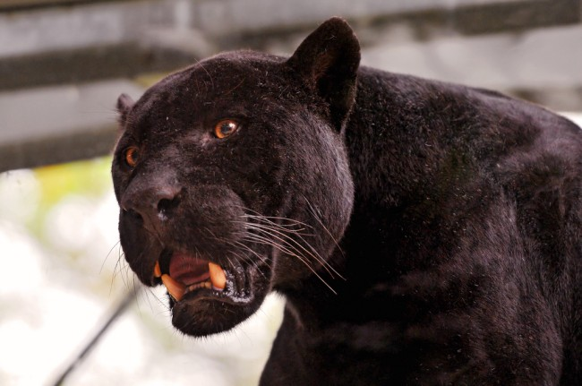Woman attacked by jaguar while taking selfie at Arizona zoo