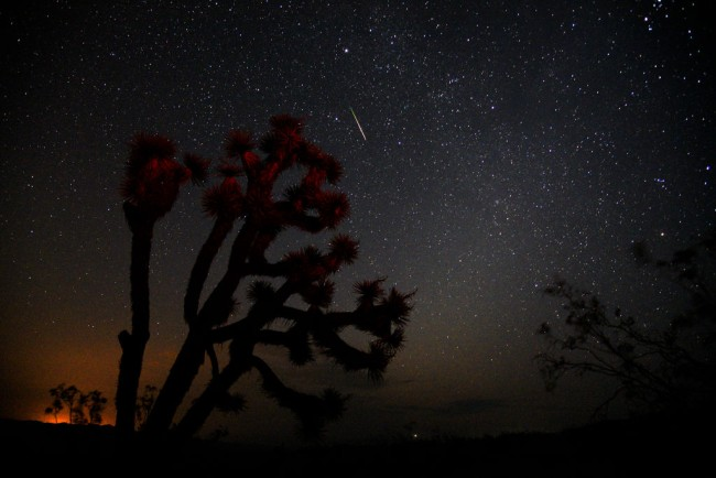 TRONA, CA - AUGUST 13: A meteorite streaks over a Yucca Tree on August 13, 2018 near Death Valley during annual Perseid Meteor Shower in Trona, California. (Photo by Bob Riha Jr./Getty Images)