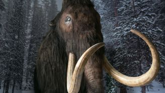 Scientists Revive Cells From A 28,000-Year-Old Woolly Mammoth And We Are One Step Closer To Jurassic Park